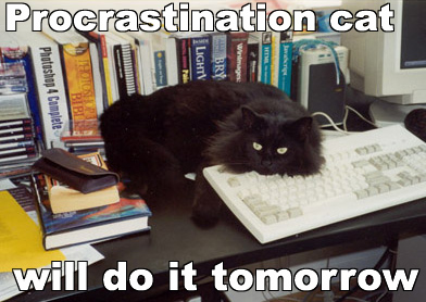 Procrastination cat will do it tomorrow... but not writer cat!