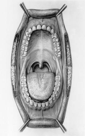 Illustration médicale : anatomie de la bouche