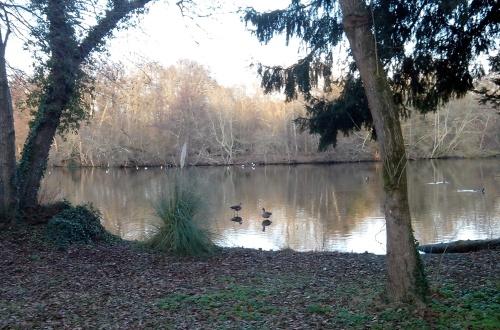 Photo : deux oies se reflètent sur l'eau d'un étang au mileu des arbres