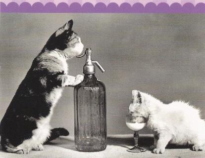 Deux chats buvant du lait que verse un siphon de bistrot