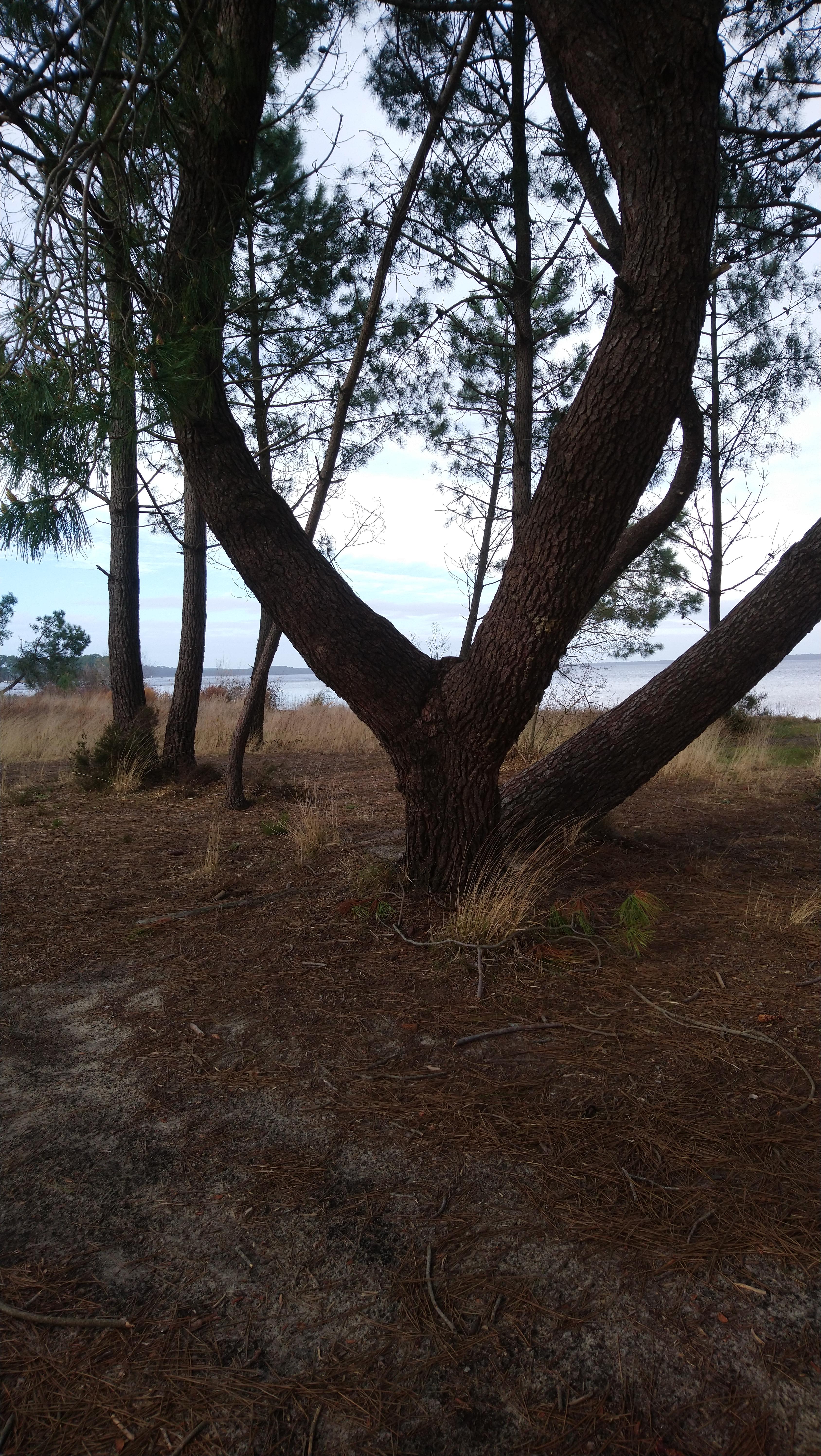 Photo d'un arbre au bord d'un lac