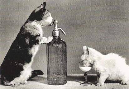 Deux chats buvant du lait avec une bouteille et un verre